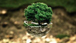 Jaké věci dělat pro ochranu přírody?