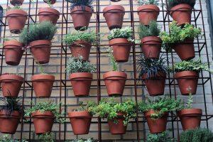 Jak netradičně pěstovat pokojové rostliny. Inspirujte se!
