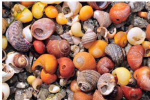 Věštění z pláže… Co všechno ti mohou říct mušle?